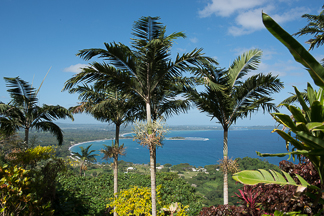 Summit Gardens, Port Vila, Vanuatu: 'The Largest Tropical Gardens in the South Pacific'