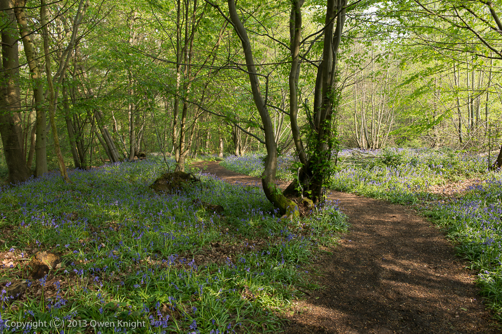 April 2014: Blake's Wood, Essex