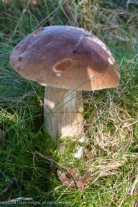 September 2014: Foraging for Mushrooms