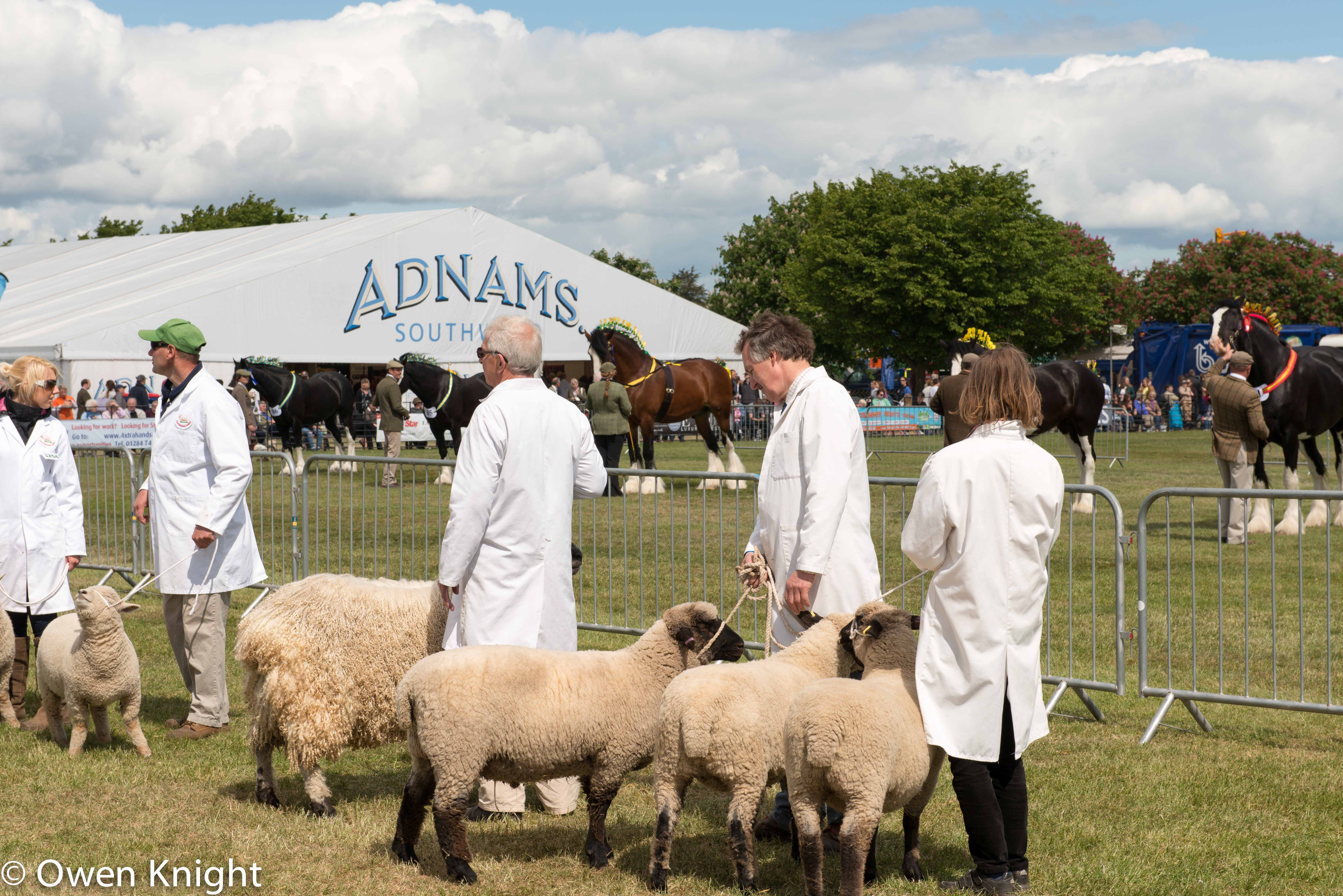 May 2015: The Suffolk Show