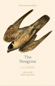 The Peregrine – a Classic Nature Book Set in Rural Mid-Essex
