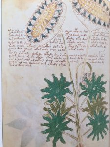The Voynich Manuscript: Decoded After 100 Years